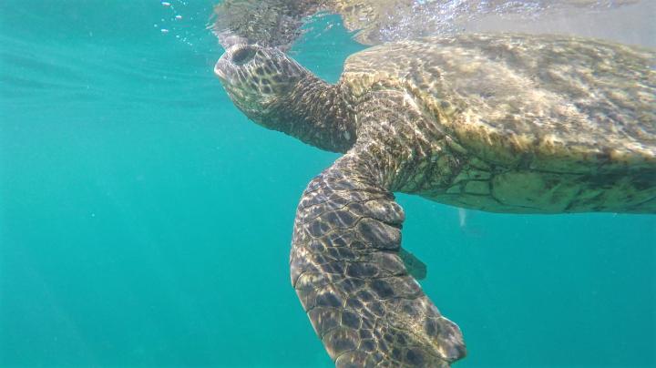 Maui autrement : 5 activités pour les aventuriersfauchés