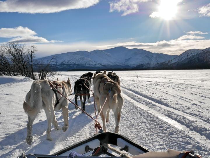 Traîneau à chiens sur Fish Lake, au Yukon