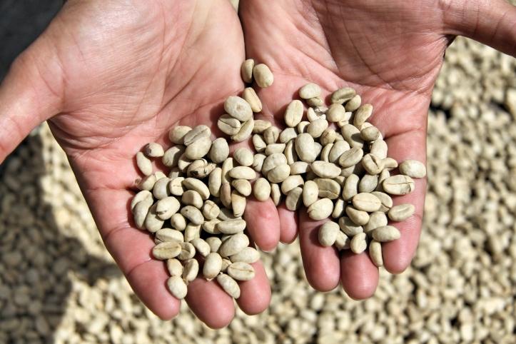 Le café, la fierté de la région de Boquete! Et avec raison - quel délice!