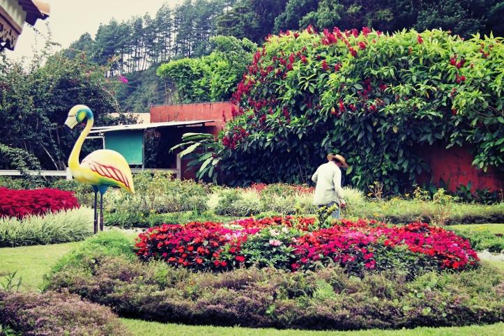 Le jardinier et le flamant - Boquete