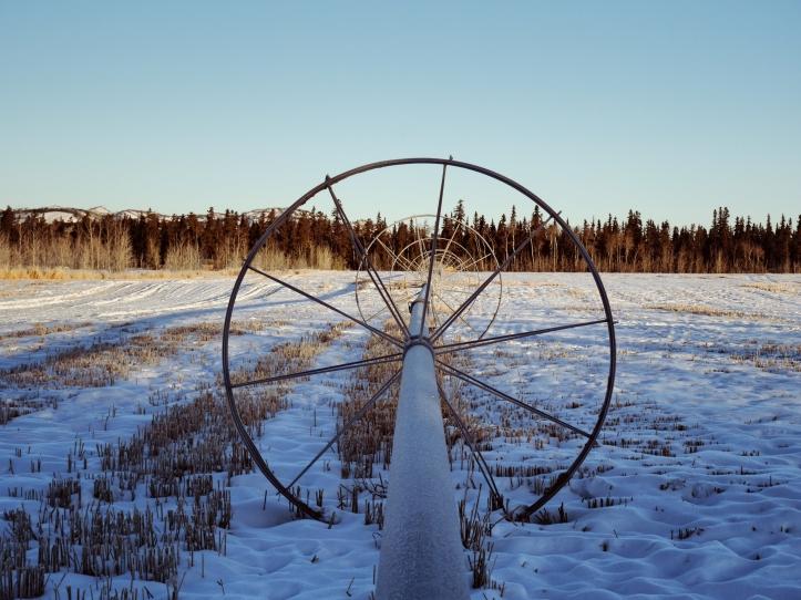 Un champ sous la neige