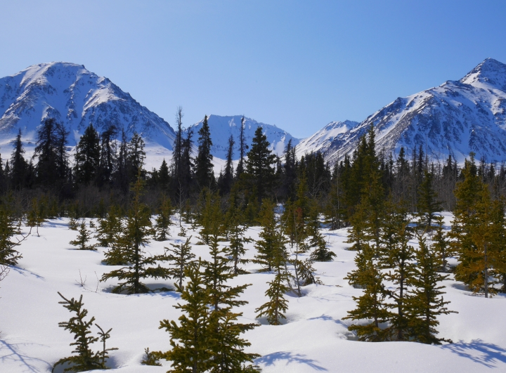 Le parc national de Kluane