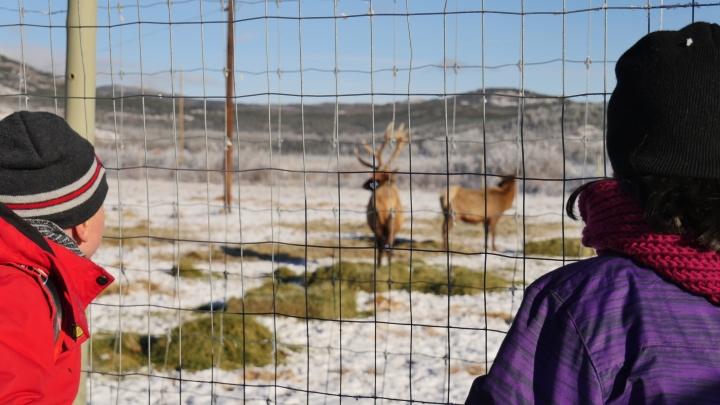 Une visite à la Yukon Wildlife Preserve, c'estOUI!